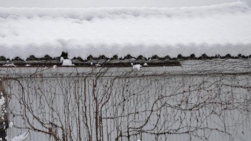 2512坪野雪142810