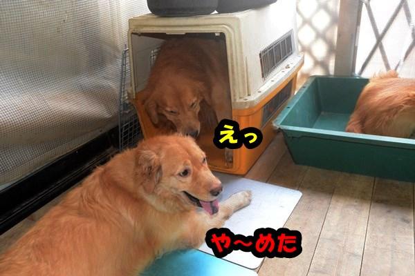 DSC_7616_201309252338407cb.jpg