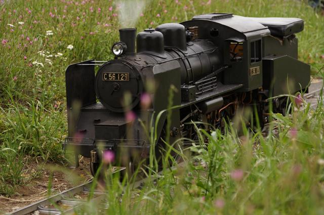 初夏の野草とC56