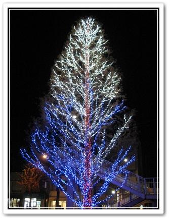杉並公会堂のツリー