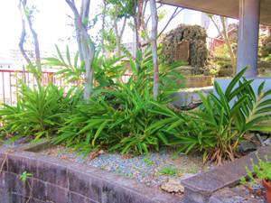 朝敏処刑地の恵比寿神社の裏