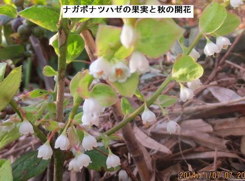 20141107撮影_9897(果実と花)