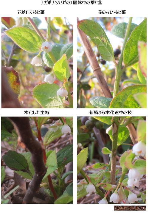 20141107撮影_9897(葉と茎)