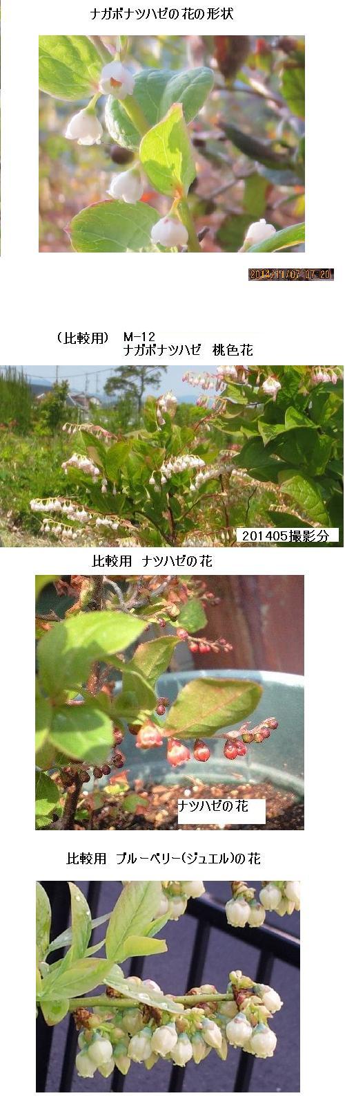 20141107撮影_9897(拡大)