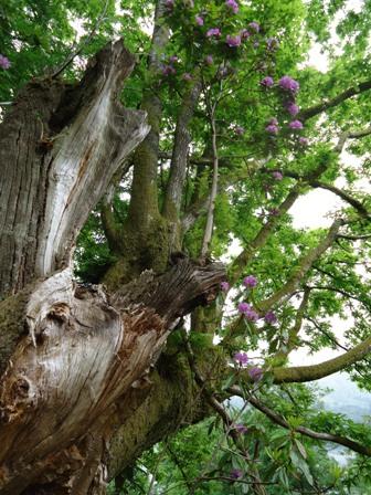 0610巨木