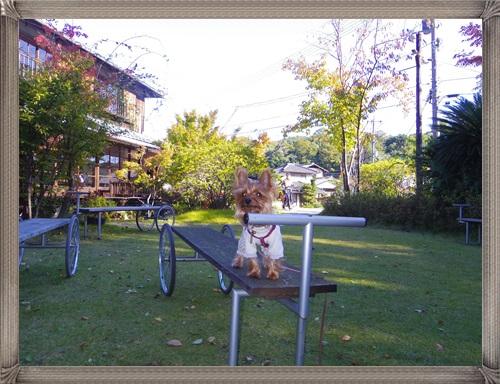三宅商店IMGP1601-20141104