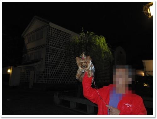 夜の美観地区IMGP1586-20141102
