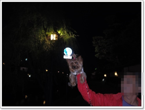 夜の美観地区IMGP1587-20141102