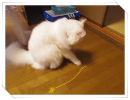 猫たちIMGP1634-20141107