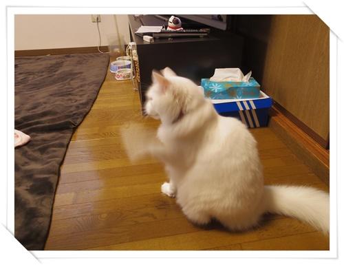 猫たちIMGP1636-20141107