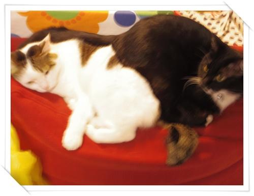 猫たちIMGP1659-20141107