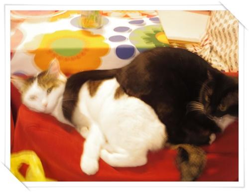 猫たちIMGP1660-20141107
