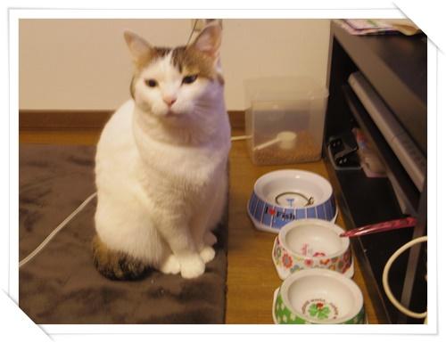 猫たちIMGP1661-20141108