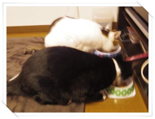 猫たちIMGP1662-20141108