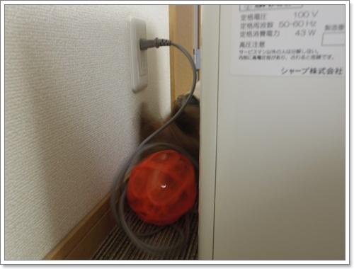 IMGP1678-20141108.jpg