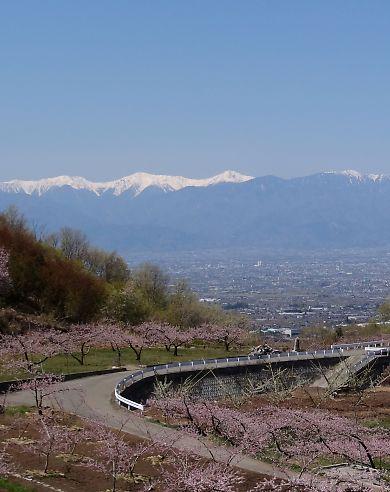 桃の里一宮金沢桃の花-2