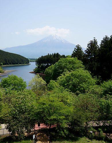 富士山と新緑田貫湖の画像-1