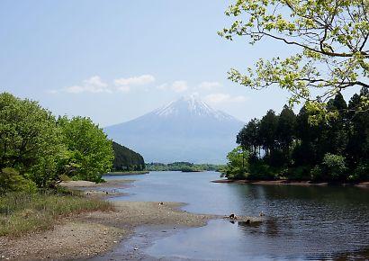 富士山と新緑田貫湖の画像-3
