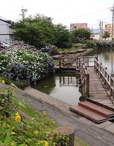 アジサイの咲く二ツ池にて-6