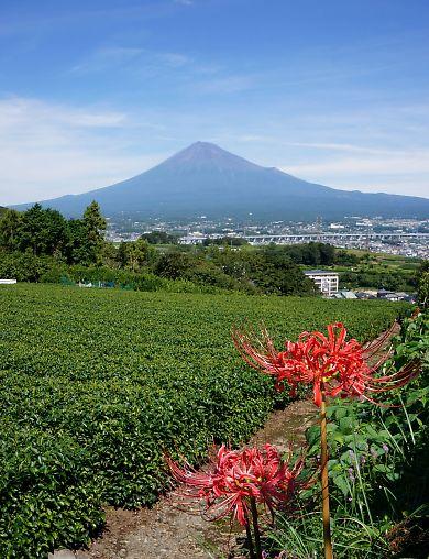 富士山を麓-8