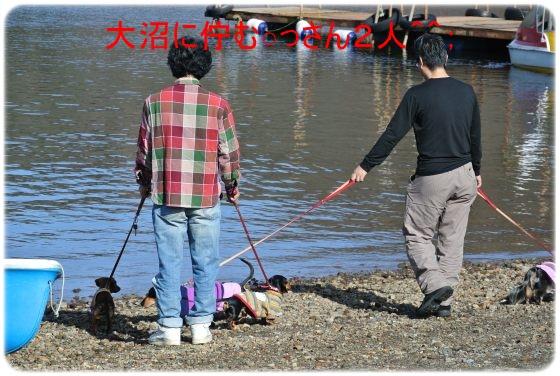 DSC_6698_20141105133945d72.jpg