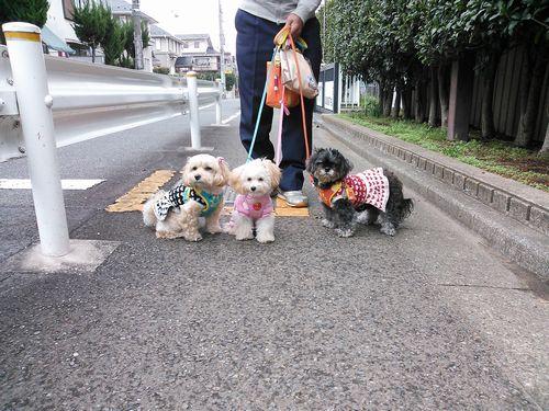 りんちゃんのお誕生日の日のお散歩小