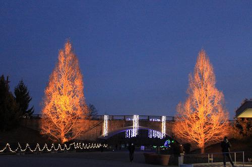 木もライトアップ