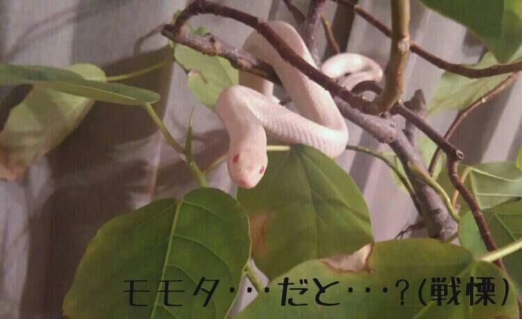 moblog_99b46bea.jpg