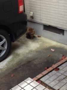ノラ猫ビビちゃん