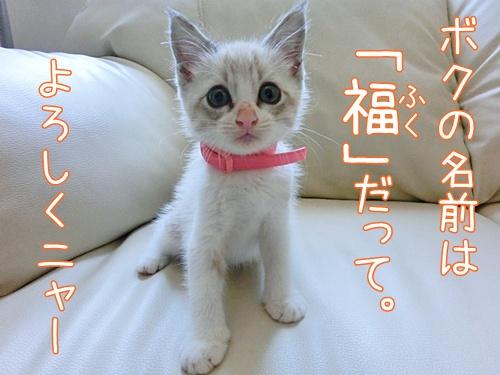 子猫ちゃん1