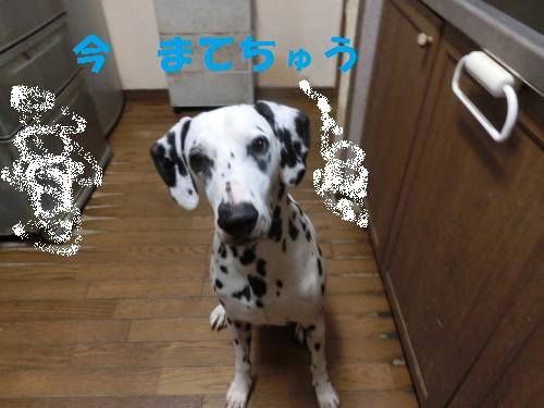 CIMG1749_convert_20130907200938-2.jpg