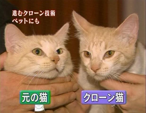 ▲(2005.05.18放送)NHKニュース10より