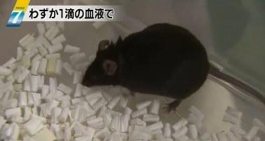 クローン ネズミ
