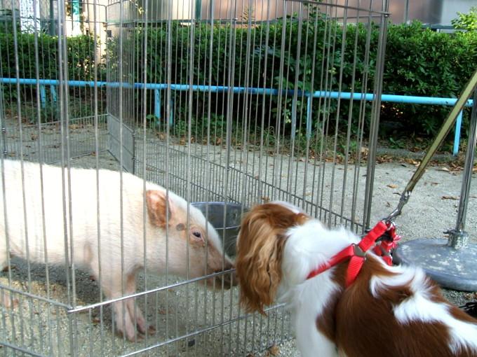 blog_2007-11-04 13-53DSCF0150
