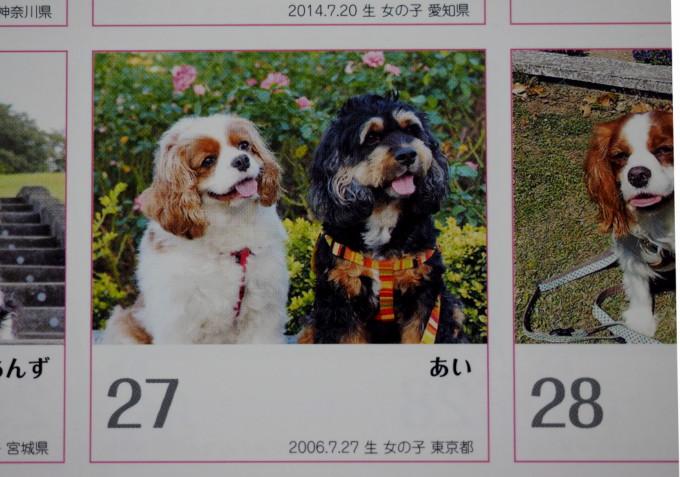 blog-PB231691.jpg