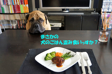 ボクには「盗み食い禁止令」出したくせにー!