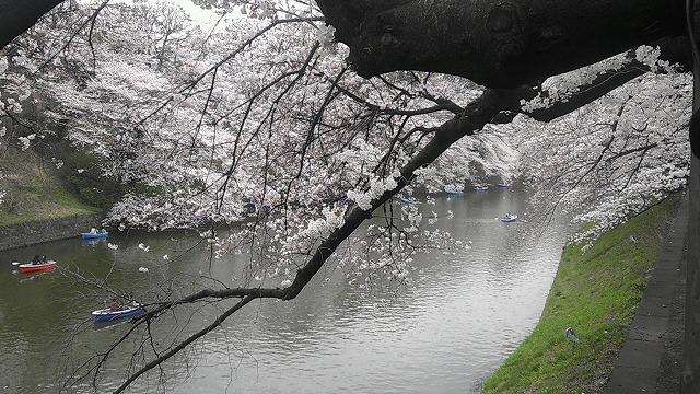 桜2014-04