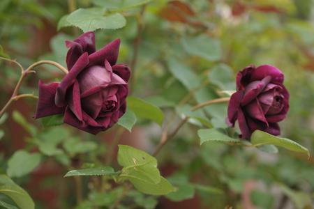 blackberry2013509-2.jpg