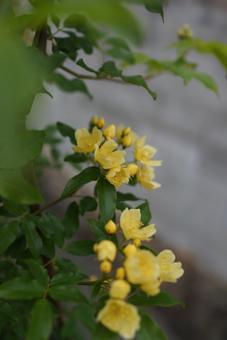 kimokkou2013425-1e.jpg