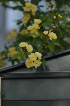 kimokkou2013425-2f.jpg