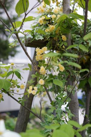 kimokkou2013430-1.jpg