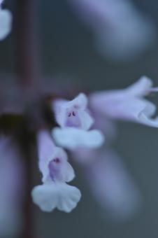 purple2013513.jpg
