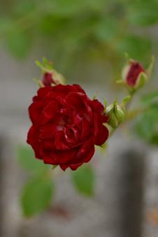 redc2013523-5a.jpg