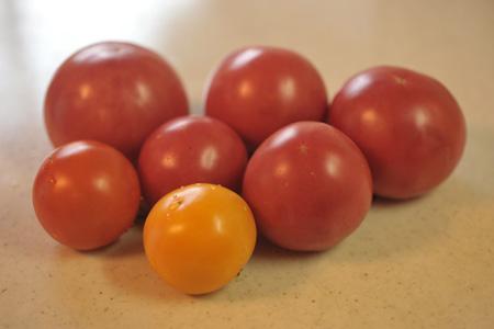 tomato2013717-1.jpg