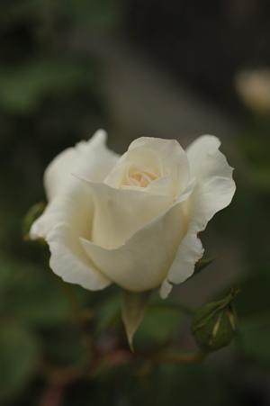 white2013509-2.jpg