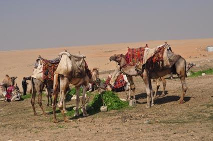 2013Egypt_00147-1.jpg