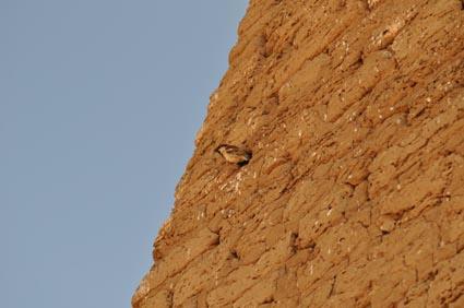 2013Egypt_00778-1.jpg