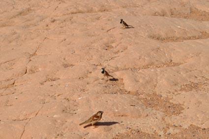 2013Egypt_00791-1.jpg