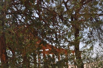 2013Egypt_00901-1.jpg