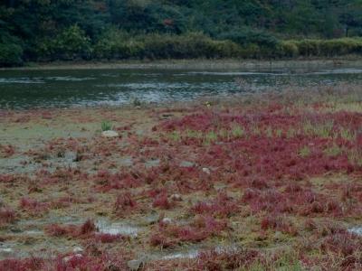 晩秋の丘陵部溜池
